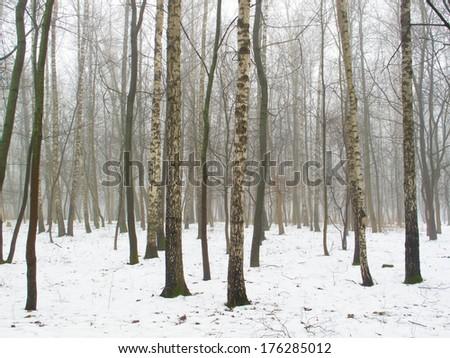 February grove in fog and melting snow #176285012