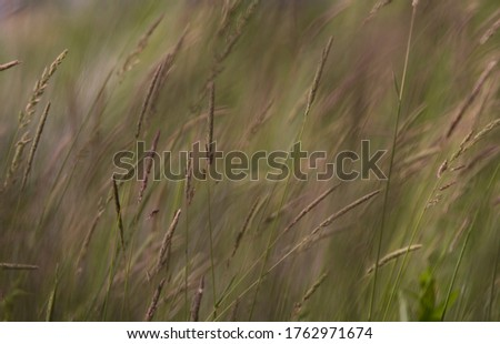Blurred photo of prairie grass blowing in the wind #1762971674