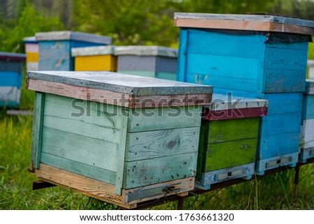 Hives in an apiary. Life of worker bees. Work bees in hive. Apiculture. Bee smoker on hive.