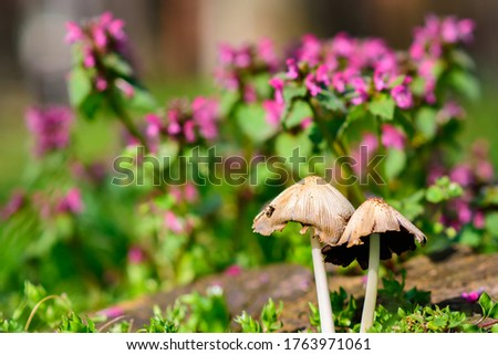 A closeup picture of mushrooms against purple flowers in the garden