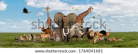 Large group of African fauna, safari wildlife animals together, in a row, isolated Royalty-Free Stock Photo #1764041681