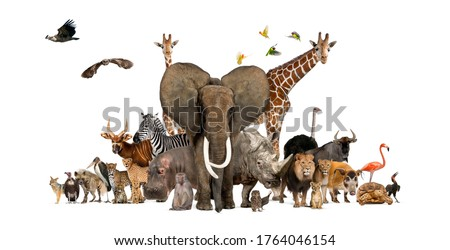 Large group of African fauna, safari wildlife animals together, in a row, isolated Royalty-Free Stock Photo #1764046154