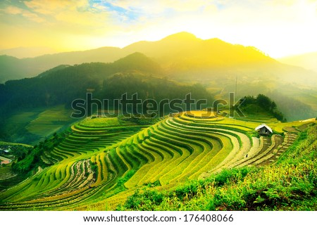 Rice fields on terraced of Mu Cang Chai, YenBai, Vietnam. Vietnam landscapes. Royalty-Free Stock Photo #176408066