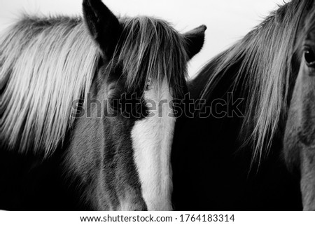 Close up of sorrel horse in black and white, pair of horses on farm. #1764183314