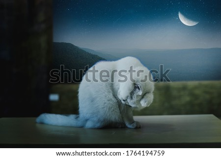 A white cat sat alone on the window of the half moon.