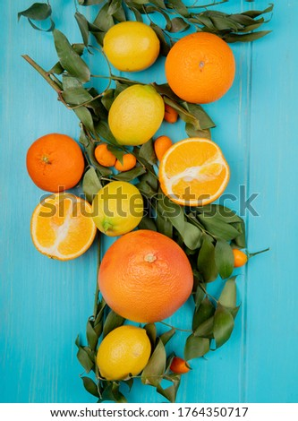top view of citrus fruits as lemon orange tangerine and kumquat on blue background decorated with leaves #1764350717