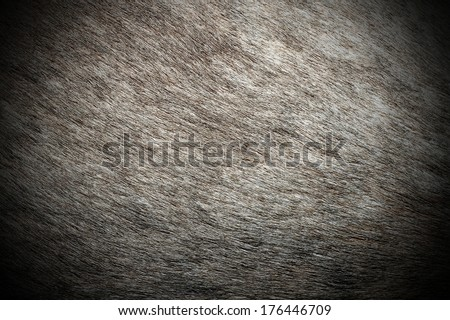 red deer ( cervus elaphus ) real pelt pattern on a hunted animal