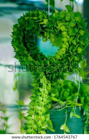 Ornamental plants that grow into the heart shape #1764543767