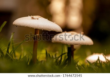 Two toadstools growing in the grass #1764672545