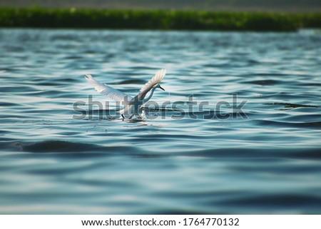 Pic of CRANE bird Flying