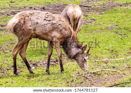 deer feeding in a field #1764781127