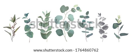 Mix of herbs and plants vector big collection. Cute rustic wedding greenery.True blue, silver dollar, spiral eucalyptus, foliage, leaves and stems. Watercolor style set. All elements are isolated #1764860762