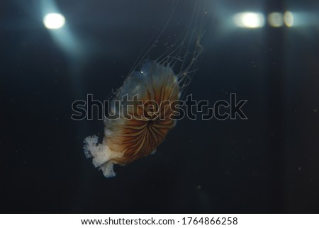 Picture of a jellyfish at Phillip and Patricia Frost museum of Science. Located in Miami, Florida.
