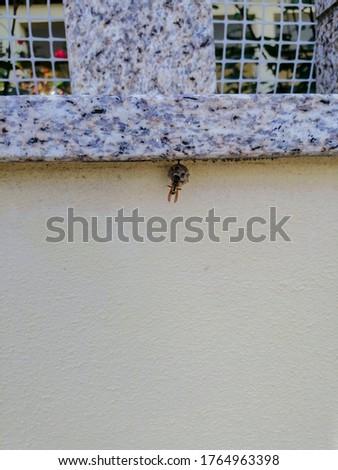 Asian Hornet building a nest. Asian hornet or yellow-legged hornet (Vespa velutina nigrithorax Lepeletier) in Nelas, Portugal.