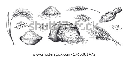 Hand drawn wheat. Grains plants in bag and cereal in bowl, rye barley and wheat ear spikes. Vector sketch illustration for food package design template, engraving food #1765381472
