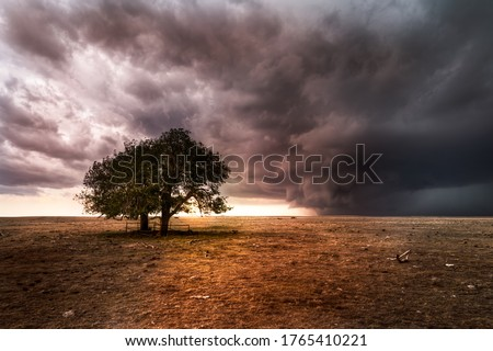 A pair of trees on the great plains during a sever thunderstorm. The sun is setting behind the storm on the horizon. The landscape is barren and dry.  Royalty-Free Stock Photo #1765410221