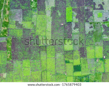 drone shot aerial view agricultural fields green paddy land patterns square symmetry irrigation background wallpaper madurai Tamilnadu india