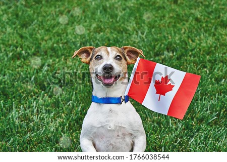 Dog sitting on grass with canadian flag on green grass. Celebration of canada day.Happy Canada day. 1st July celebrate national holiday of Canada called as Canada's birthday #1766038544
