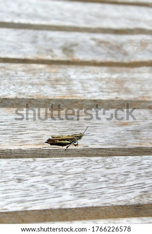 Grasshopper, sitting on a wooden bench.