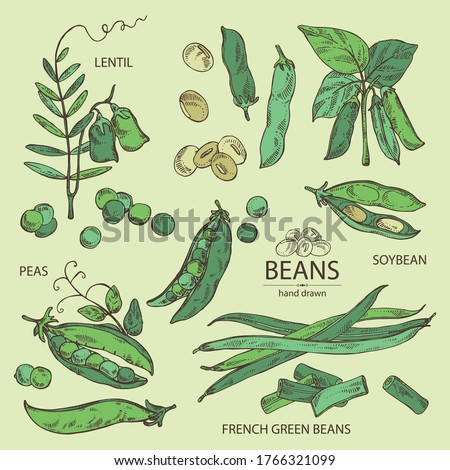 Collection of vegetables: soybean plant, peas pod, lettil beans and pod, french green beans. Vector hand drawn illustration. Royalty-Free Stock Photo #1766321099