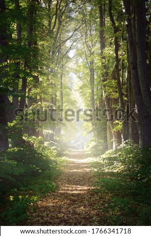 Rural gravel road (alley) through mighty green linden trees. Soft sunlight, sunbeams. Fairy forest landscape. Picturesque scenery. Pure nature. Art, hope, heaven, loneliness, wilderness concepts Royalty-Free Stock Photo #1766341718