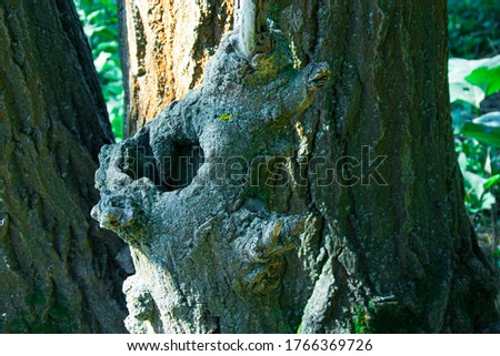 Bark with unusual patterns. Tree bark texture. Interesting patterns on the bark of trees. Bark on a tree closeup. Old Wood Tree Texture Background #1766369726