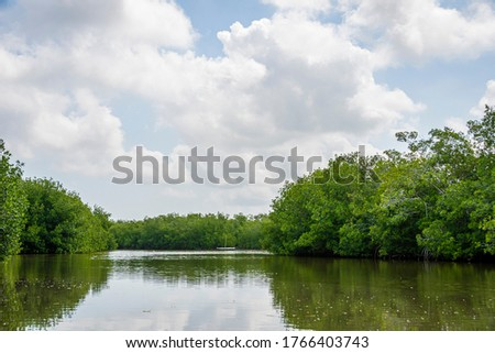 Mangrove swamp of Cartagena de Indias, Colombia