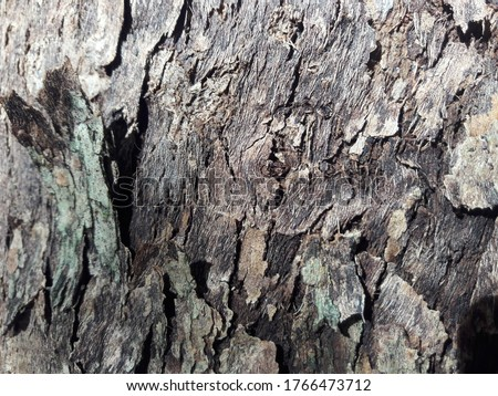Embossed texture of the brown bark.Tree bark texture. Seamless bark tree texture. texture of bark wood use as natural background #1766473712