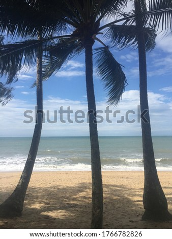picture at the beach in Palm Cove north of Cairns in Queensland Australia