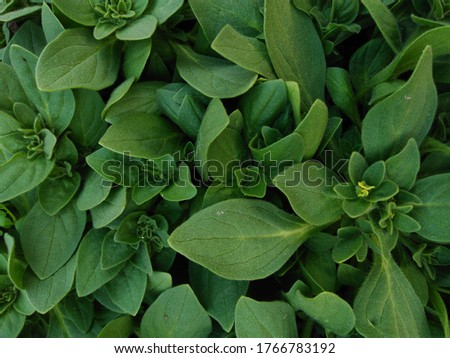 leaf background Green beautiful pattern green wallpaper leaves on ground beautiful garden texture leaves green leaf wallpaper leaf desktop wallpaper mobile wallpaper