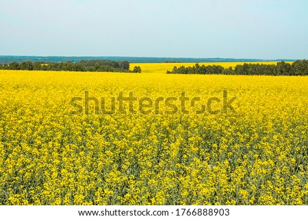Rapeseed field against the blue sky, summer landscape #1766888903