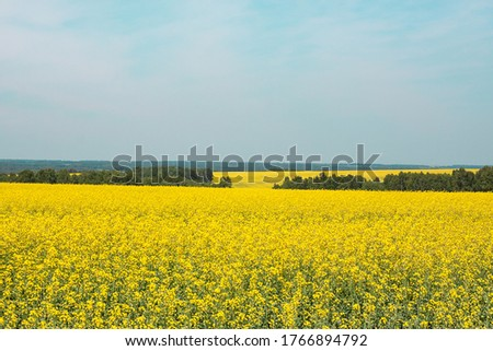 Yellow rapeseed field against the blue sky #1766894792