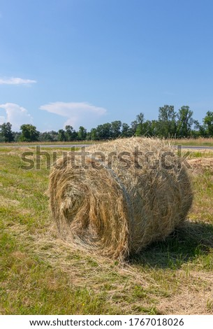 Landscape with a mowed grass meadow with hay rollers on a sunny summer day. One hay bale in the foreground. Latvia. Preparation of feed for livestock #1767018026