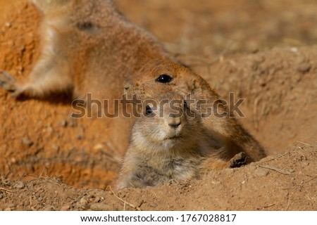 two gophers in the rocky desert on the sand during the day