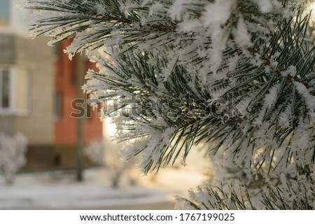 Fir branch in snow. Green tree, white crystals of frozen water. House. Sunlight. Concept - New Year, Christmas holiday. Selective focus. Blur. #1767199025