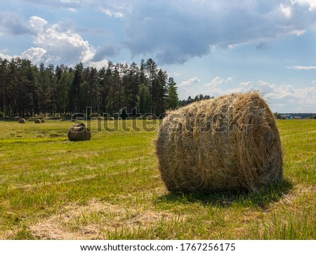 Landscape with a mowed grass meadow with hay rollers on a sunny summer day. One hay bale in the foreground. Latvia. Harvesting of feed for agricultural livestock #1767256175