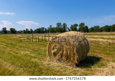 Landscape with a mowed grass meadow with hay rollers on a sunny summer day. One hay bale in the foreground. Latvia. Harvesting of feed for agricultural livestock #1767256178