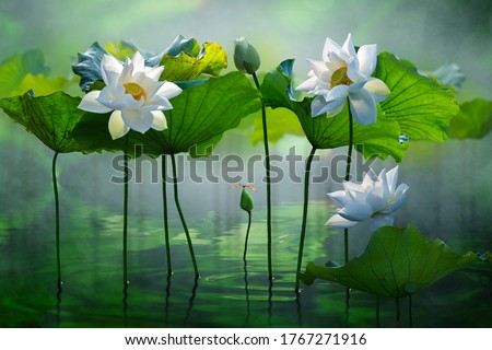 Beautiful white lotus flower in the lake and lotus flower plants, pure white lotus flower. #1767271916