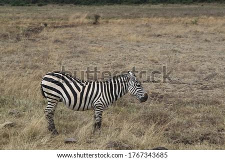 African safari in Kenya wildlife Royalty-Free Stock Photo #1767343685