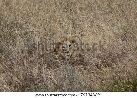 African safari in Kenya wildlife Royalty-Free Stock Photo #1767343691