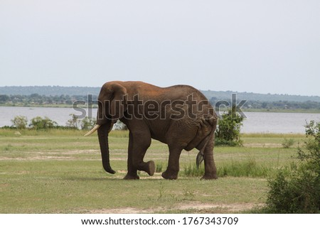 African safari in Kenya wildlife Royalty-Free Stock Photo #1767343709