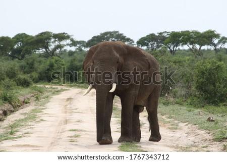 African safari in Kenya wildlife Royalty-Free Stock Photo #1767343712