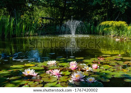 Magical garden pond with blooming water lilies and lotuses. There is beautiful cascading fountain in pond. Evergreens and aquatic plants are reflected in water. Atmosphere of relaxation and rest.