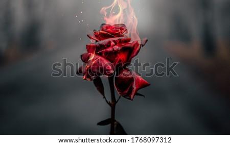 Beautiful Burning Red Rose Background Royalty-Free Stock Photo #1768097312