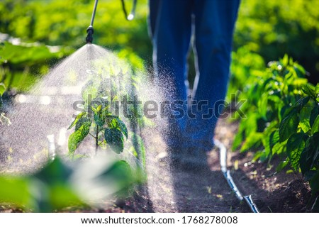Farmer spraying vegetable green plants in the garden with herbicides, pesticides or insecticides. Royalty-Free Stock Photo #1768278008