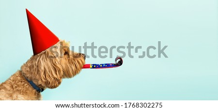 Cute dog celebrating with red pary hat and blow-out against a blue background and copy space to side #1768302275