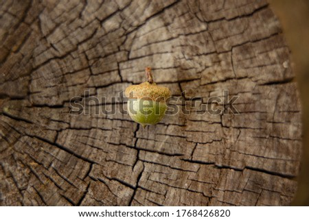 autumn still life simple picture acorn on stump wooden background textured surface