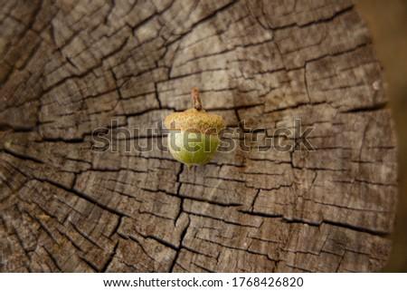 autumn still life simple picture acorn on stump wooden background textured surface