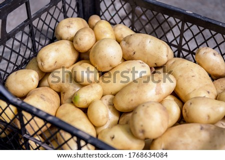 Young organic potatoes stand out among the many large background potatoes on the market. Potatoes in a box. A pile of potato root. Close up of potato texture.  #1768634084