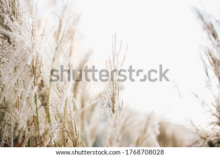 Dry flowers light beige background Royalty-Free Stock Photo #1768708028